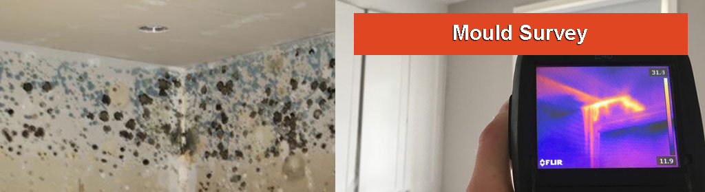Mould Investigation